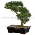 Kunstpflanze Bonsai Zeder Grün