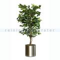 Kunstpflanze Ficus Benjamina 150 cm Grün
