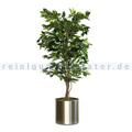 Kunstpflanze Ficus Benjamina Grün 210 cm Grün