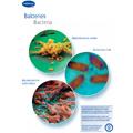Bild hartmann_bakterien.pdf